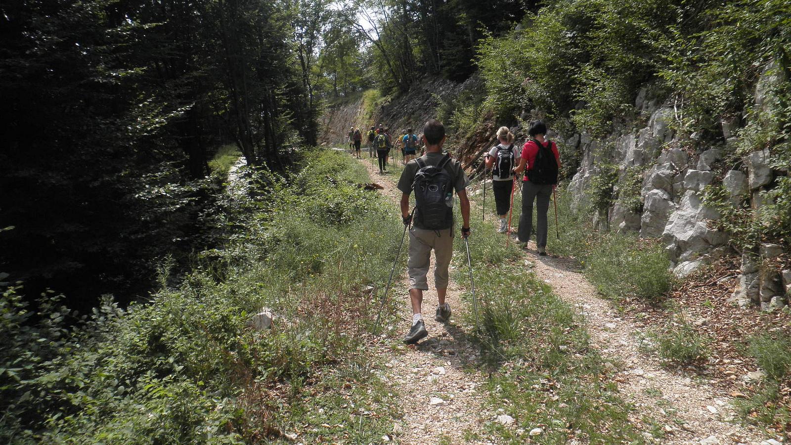 Marche nordique en forêt